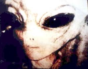 Gray Alien